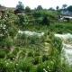 Artikel zum Kleingartenwesen